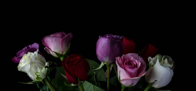 Image of Roses by Kayhan Ghodsi